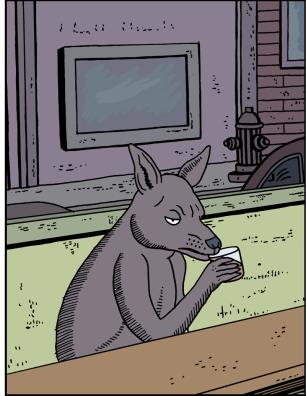 Kangaroo10b
